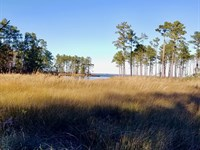 Rural Land Beaufort County, NC : Aurora : Beaufort County : North Carolina