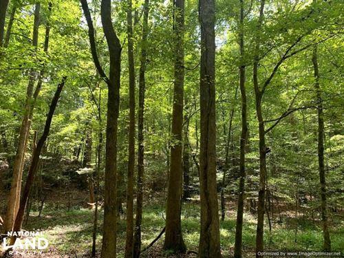 Beautiful Bentonia Hardwood Propert : Bentonia : Yazoo County : Mississippi