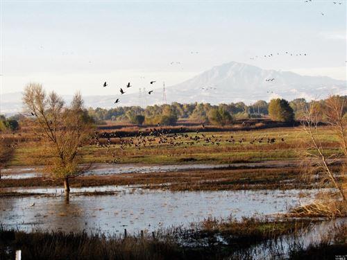 Northern California Recreational : Oakley : Contra Costa County : California