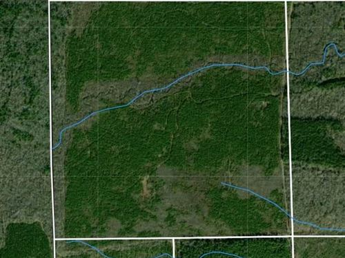160 Acres of Timber in Clay County : Pheba : Clay County : Mississippi