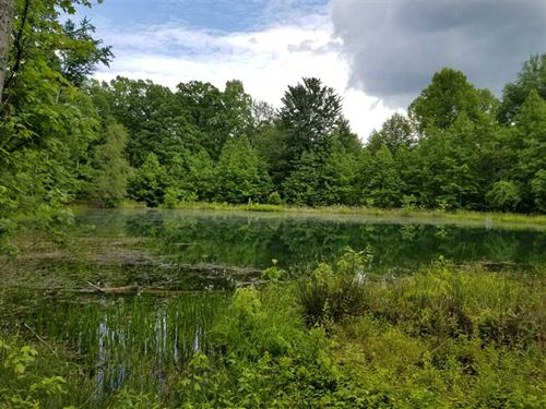 124.6 Acres Usable Land With LA : Tracy City : Grundy County : Tennessee