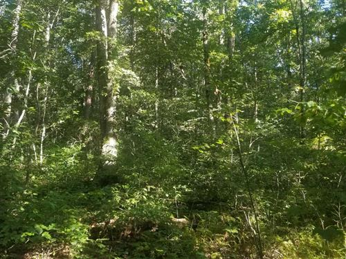 109.9 Acres With Hardwoods And : Gruetli-Laager : Grundy County : Tennessee