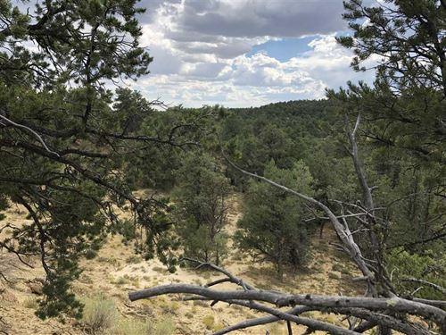 Jicarilla Ridge -5 Ac, Hwy 95 Re : Regina : Sandoval County : New Mexico