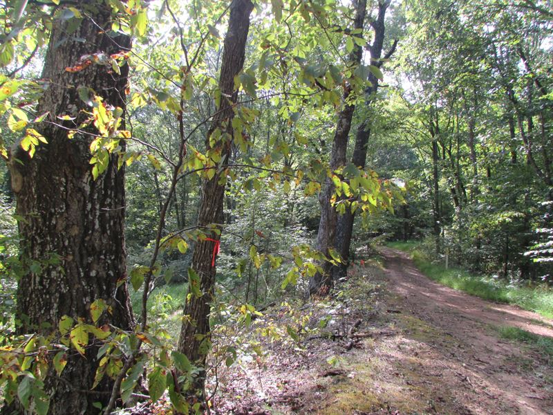 Great Hunting Location In WV : New Milton : Doddridge County : West Virginia