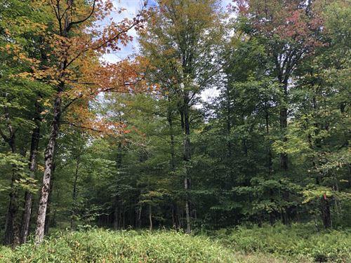 Southern Adirondack Camp Site : Remsen : Oneida County : New York