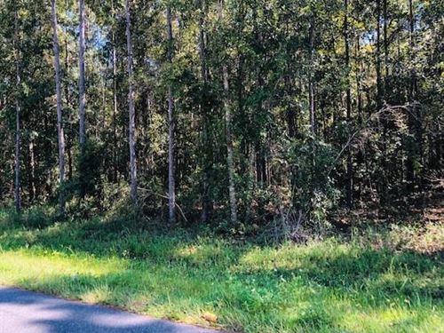 1.24 Acres 778659 : Bronson : Levy County : Florida