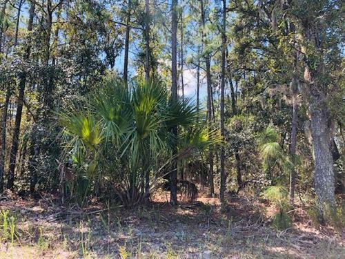 2.5 Acres 778663 : Bronson : Levy County : Florida