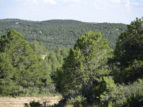 Stunning Property In Nm With Trees : Timberon : Otero County : New Mexico