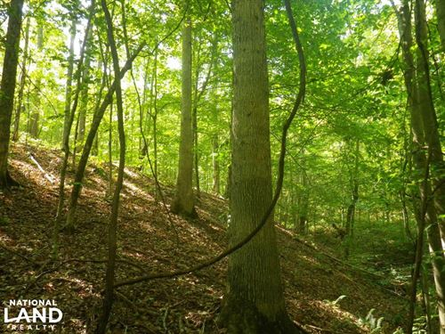 166 Acres Adjoining Marrowbone Stat : Edmonton : Metcalfe County : Kentucky