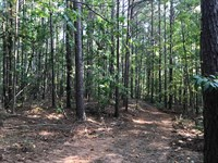 12 Acre Wooded Home Site : Odenville : Saint Clair County : Alabama