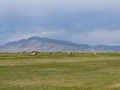 Laramie Irrigated Pasture : Laramie : Albany County : Wyoming
