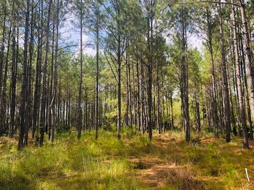 46.3 Ac 778383 : Chiefland : Levy County : Florida