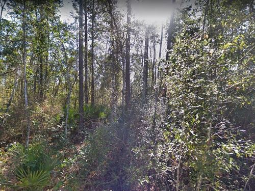 1.38 Acres For Sale In Palatka, Fl : Palatka : Putnam County : Florida