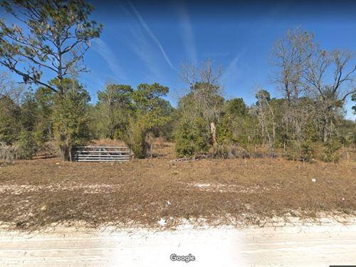 2 Acres For Sale In Melrose, Fl : Melrose : Putnam County : Florida