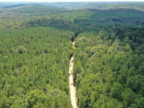 80 AC Hunting/Timberland Tract : Moulton : Lawrence County : Alabama