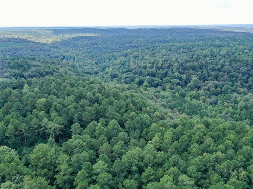 195 Acres Bankhead National Forest : Moulton : Lawrence County : Alabama