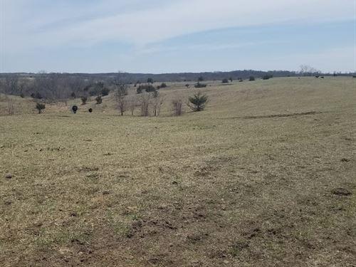 153 Acres Pasture/Timber Southern : Cincinnati : Appanoose County : Iowa