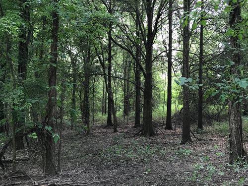 Hunting In Madison Parish, LA : Tallulah : Madison Parish : Louisiana