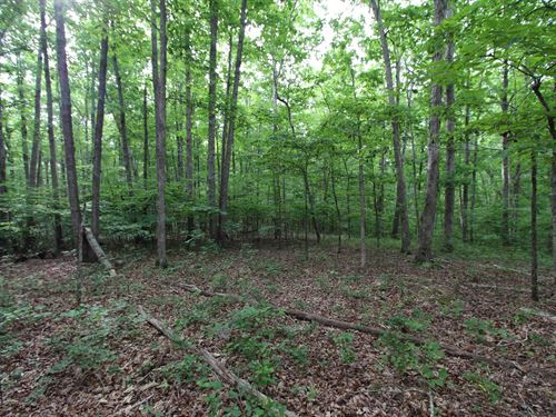 83 Acre Recreational Tract : Centerville : Hickman County : Tennessee