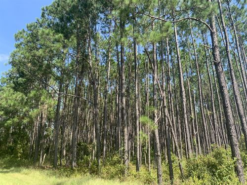 Homesite, Getaway, Invest In 21+ Ac : Waycross : Ware County : Georgia