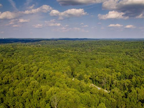 Large Wooded Acreage : Pittsboro : Chatham County : North Carolina