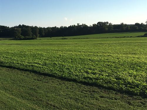 115 Acres On I-65 : Good Hope : Cullman County : Alabama