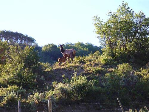 Grassy Creek Ranch : Hayden : Routt County : Colorado