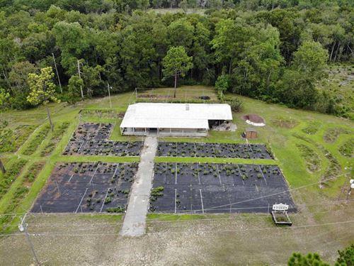33.7 Acres of Recreational And Hun : Georgetown : South Carolina