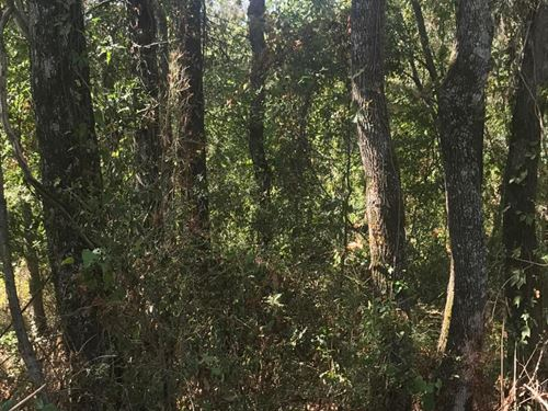 Timber Hunting : Delhi : Richland Parish : Louisiana