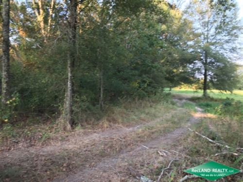 57 Ac, Hunting Tract With Open Gro : Darnell : West Carroll Parish : Louisiana