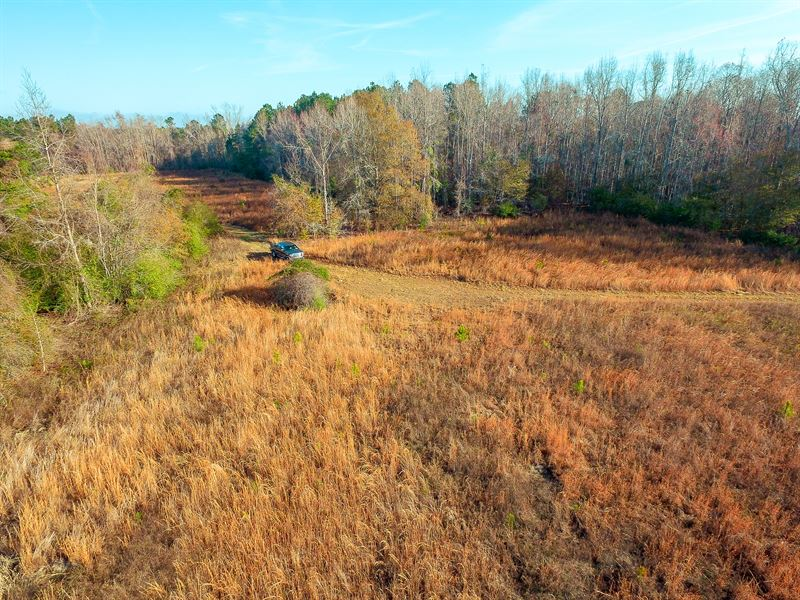Private, Peaceful Homesite In Long : Ludowici : Long County : Georgia