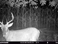 Recreational Escape Hunting Land : Hancock : Adams County : Wisconsin