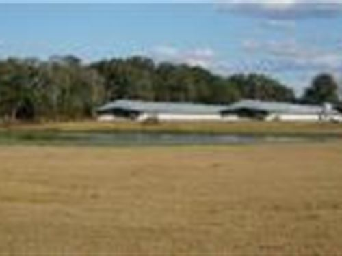 Working Poultry Farm : Live Oak : Suwannee County : Florida