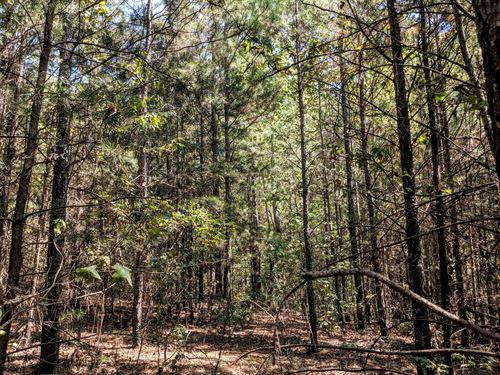 Beautiful Secluded Acreage : Cedartown : Polk County : Georgia