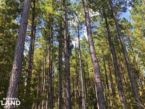 Edisto River Hunting And Timberland : Bamberg : South Carolina