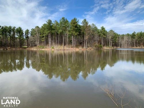 Investment Timberland With Prime DE : West : Holmes County : Mississippi