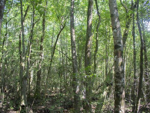 13 Acres In Wayne County In Waynesb : Waynesboro : Wayne County : Mississippi
