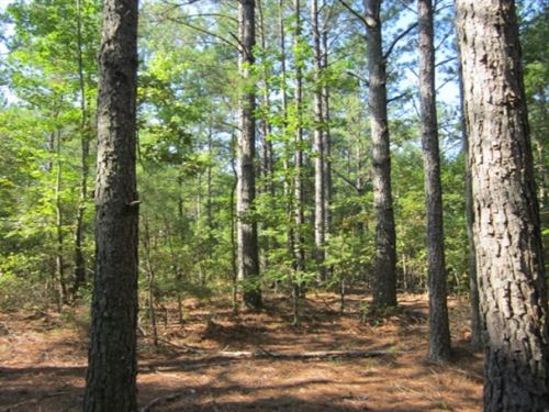 67.5 Acres In Alcorn County In Rien : Rienzi : Alcorn County : Mississippi