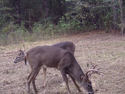 Land Hunting & Recreational Land : Wesson : Lincoln County : Mississippi