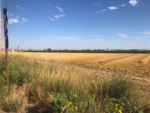 Diamond Valley 10 Acres : Windsor : Weld County : Colorado