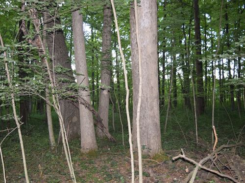 16.98 Acres in Marion County : Harpster : Marion County : Ohio