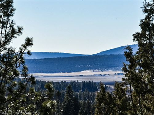 Spend Summer Among Trees In Oregon : Bonanza : Klamath County : Oregon