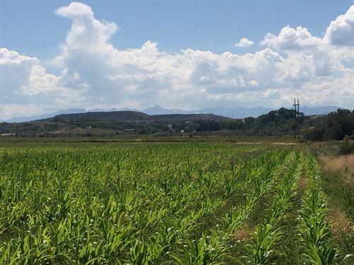 Agricultural Land, Montrose : Montrose : Colorado