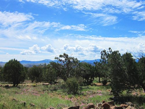 Beautifully Treed Land, Electric : Concho : Apache County : Arizona