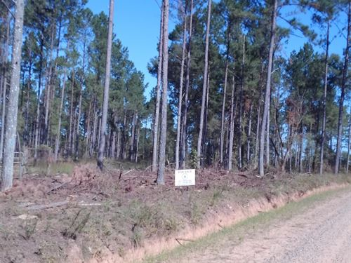 Timber Land With Creek : Haddock : Jones County : Georgia
