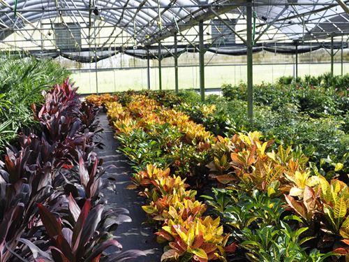 Lake County Foliage Nursery : Eustis : Lake County : Florida