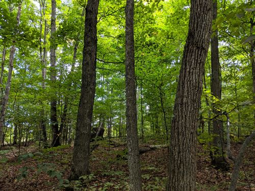 Hunting Land With Timber : Empire : Leelanau County : Michigan