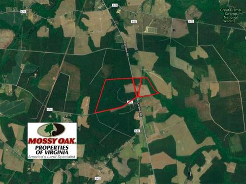224 Acres of Timber And Farm Land : Cypress Chapel : Suffolk City County : Virginia