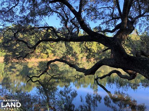 Awendaw Large Lot : Awendaw : Charleston County : South Carolina