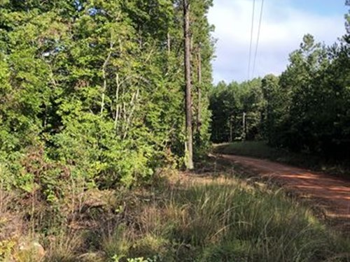 2+/- Acres Near Mount Cheaha : Lineville : Clay County : Alabama